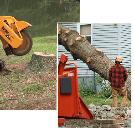 Tree Stump Removal Services In Melbourne